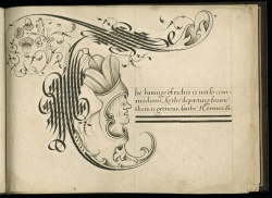 Wing-MS-ZW-545-.S431-(Vault),-Alphabet-of-ornamental-capitals,-John-Scottowe,-letter-T