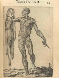 Juan Valverde de Amusco ,Anatomia del corpo humano, 1560